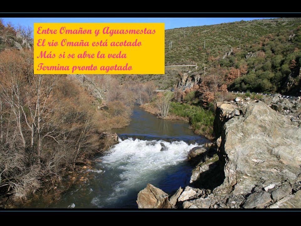 Entre Omañon y Aguasmestas El rio Omaña está acotado Más si se abre la veda Termina pronto agotado
