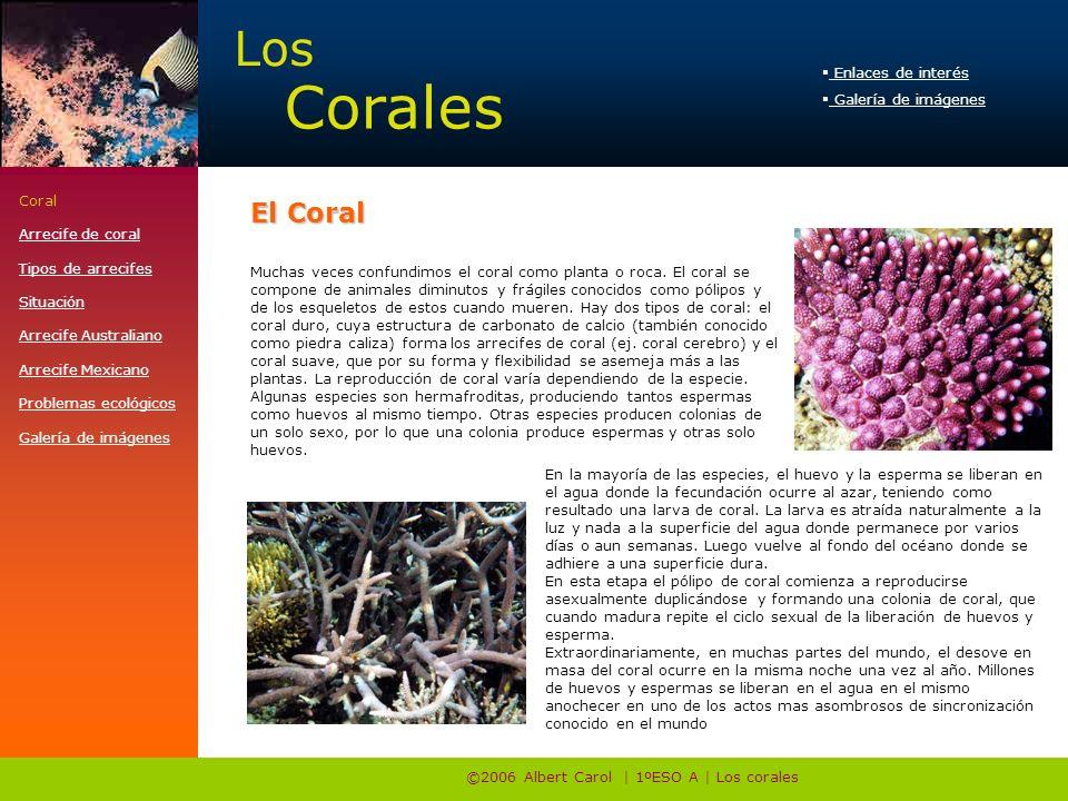 Los Corales ©2006 Albert Carol | 1ºESO A | Los corales Coral Arrecife de coral Tipos de arrecifes Situación Arrecife Australiano Arrecife Mexicano Pro