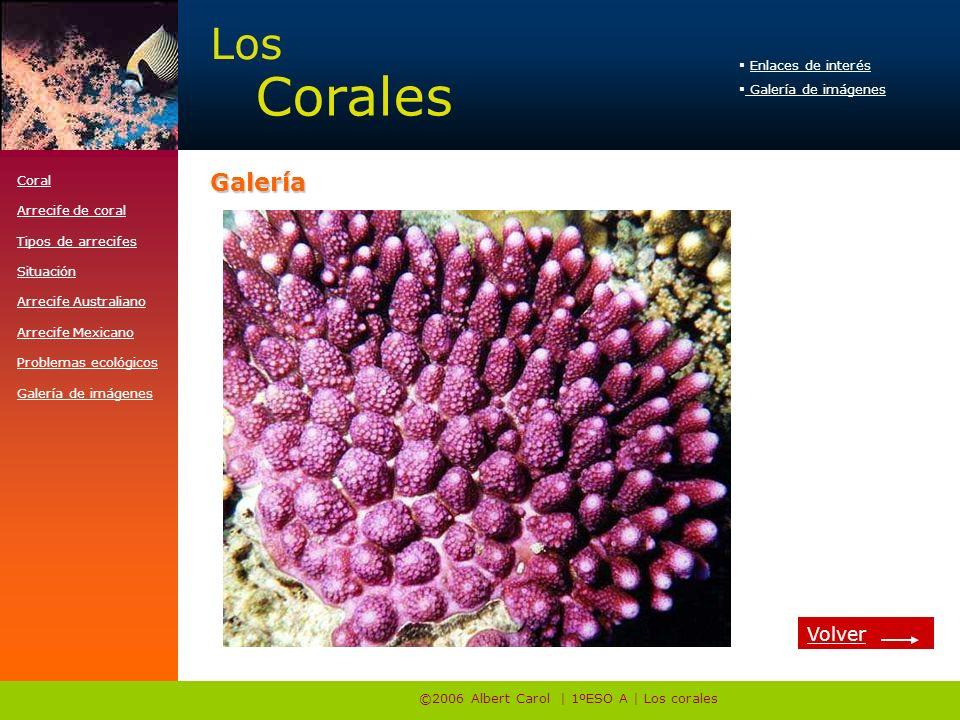 ©2006 Albert Carol | 1ºESO A | Los corales Enlaces de interés Galería de imágenes Los Corales http://www.e-travelware.com/zdive/dvcoral.htmGalería Vol