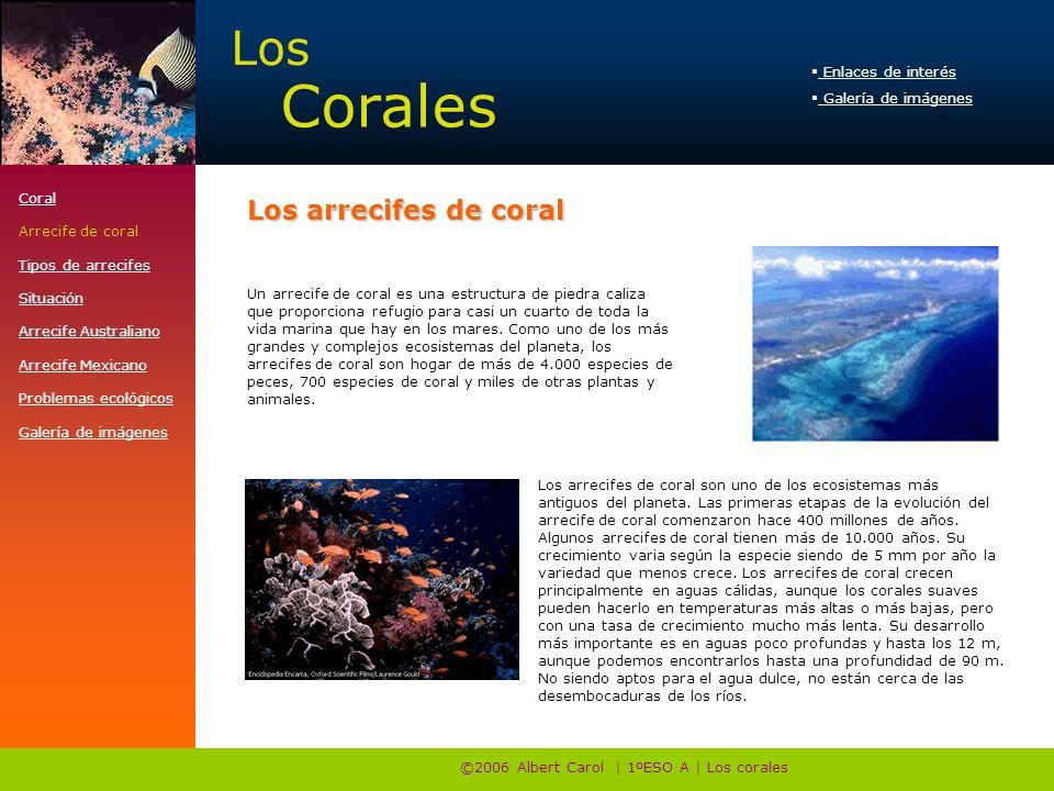 ©2006 Albert Carol | 1ºESO A | Los corales Un arrecife de coral es una estructura de piedra caliza que proporciona refugio para casi un cuarto de toda la vida marina que hay en los mares.