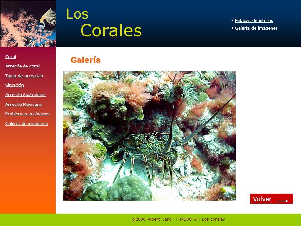 ©2006 Albert Carol | 1ºESO A | Los corales Enlaces de interés Galería de imágenes Los Corales http://www.e-travelware.com/zdive/dvcoral.htmGalería Coral Arrecife de coral Tipos de arrecifes Situación Arrecife Australiano Arrecife Mexicano Problemas ecológicos Galería de imágenes Volver