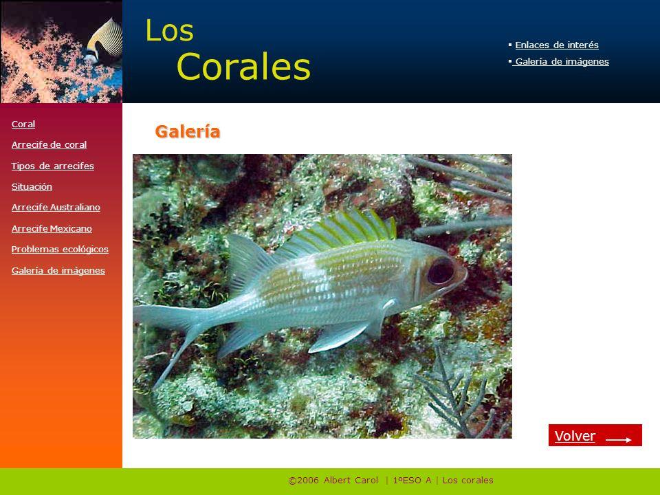 ©2006 Albert Carol | 1ºESO A | Los corales Enlaces de interés Galería de imágenes Los Corales http://www.e-travelware.com/zdive/dvcoral.htmGalería Cor