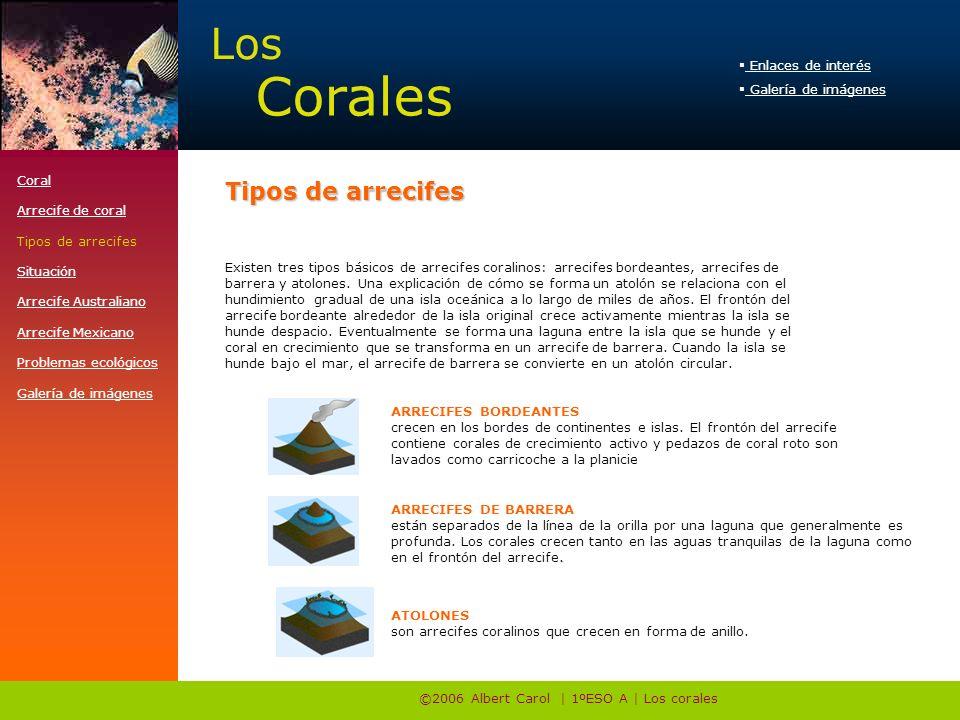 ©2006 Albert Carol | 1ºESO A | Los corales Existen tres tipos básicos de arrecifes coralinos: arrecifes bordeantes, arrecifes de barrera y atolones.