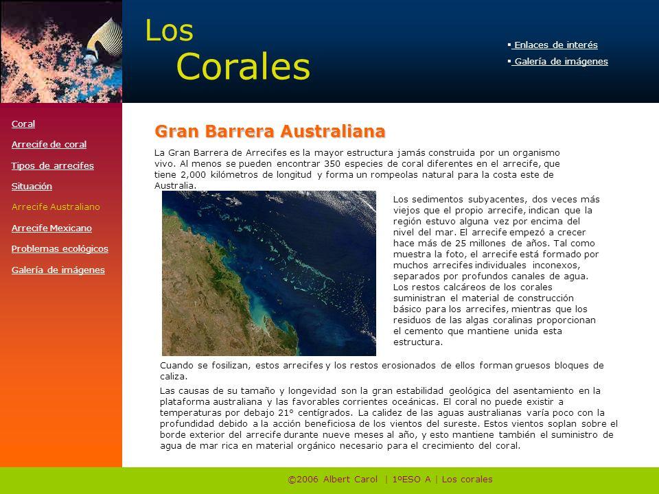 ©2006 Albert Carol | 1ºESO A | Los corales La Gran Barrera de Arrecifes es la mayor estructura jamás construida por un organismo vivo. Al menos se pue