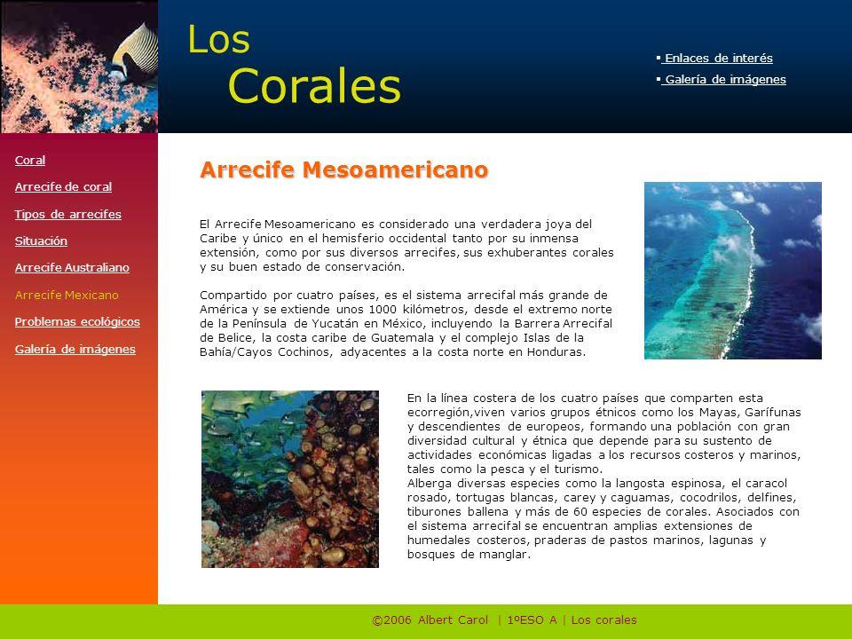 ©2006 Albert Carol | 1ºESO A | Los corales El Arrecife Mesoamericano es considerado una verdadera joya del Caribe y único en el hemisferio occidental tanto por su inmensa extensión, como por sus diversos arrecifes, sus exhuberantes corales y su buen estado de conservación.