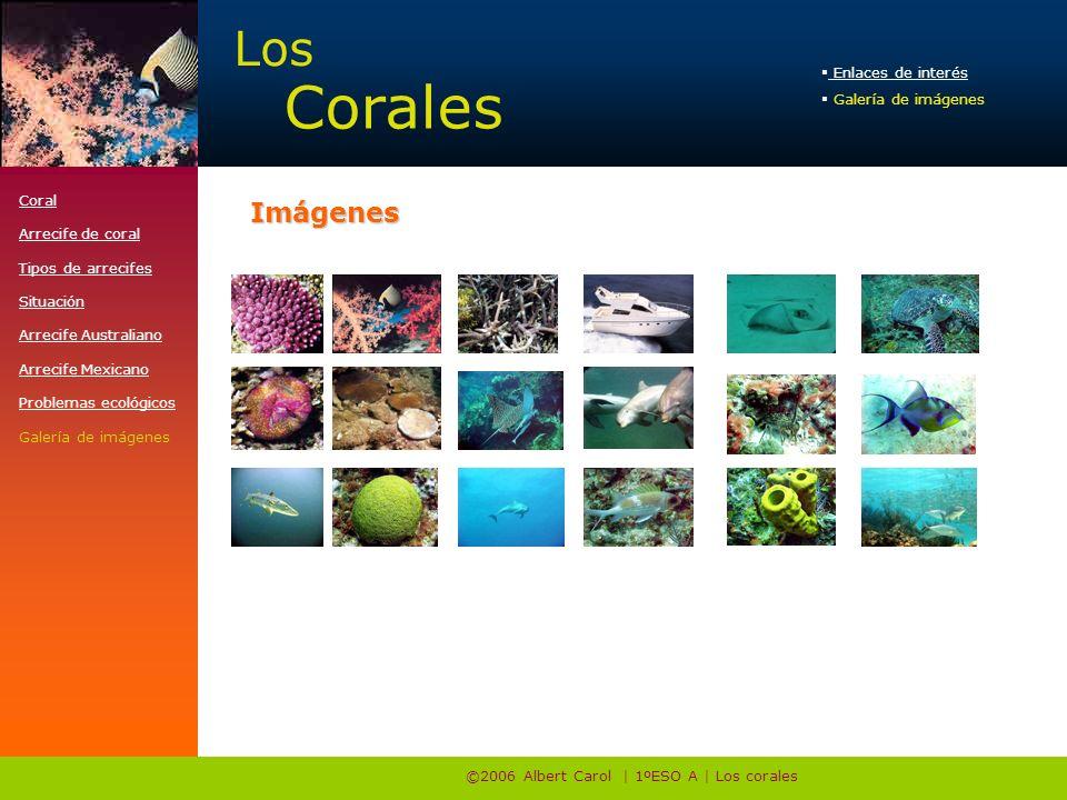 ©2006 Albert Carol | 1ºESO A | Los corales Coral Arrecife de coral Tipos de arrecifes Situación Arrecife Australiano Arrecife Mexicano Problemas ecológicos Galería de imágenes Enlaces de interés Enlaces de interés Galería de imágenes Los Corales Imágenes