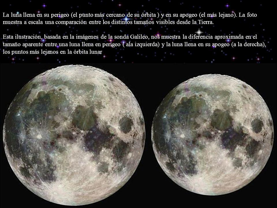 La luna llena en su perigeo (el punto más cercano de su órbita ) y en su apogeo (el más lejano). La foto muestra a escala una comparación entre los di