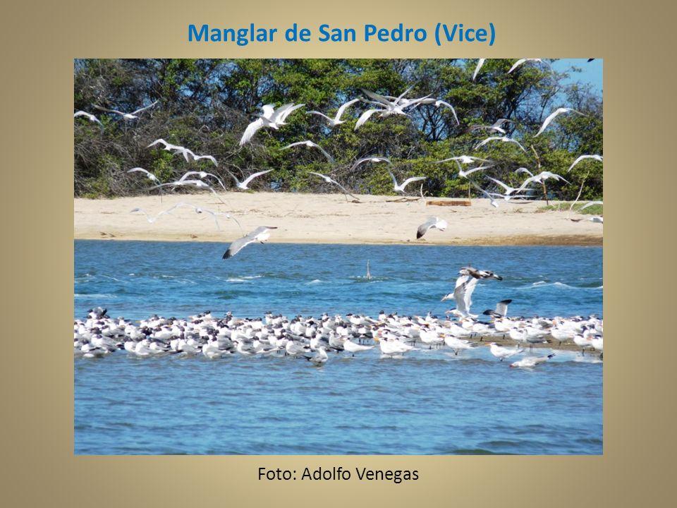 Manglar de San Pedro (Vice) Foto: Adolfo Venegas