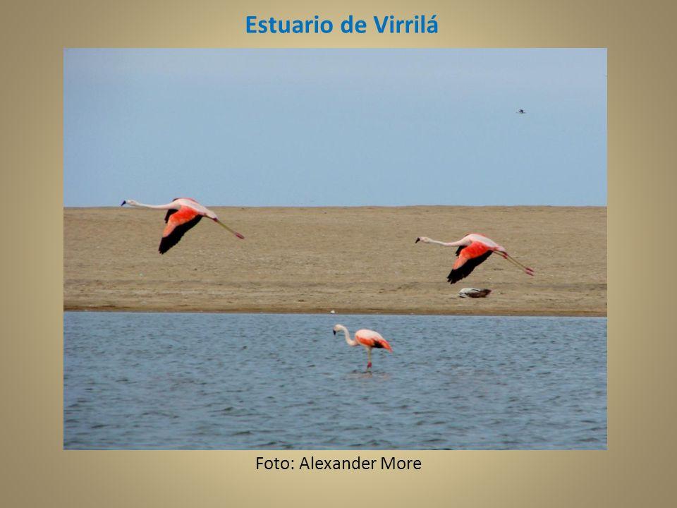 Estuario de Virrilá Foto: Alexander More