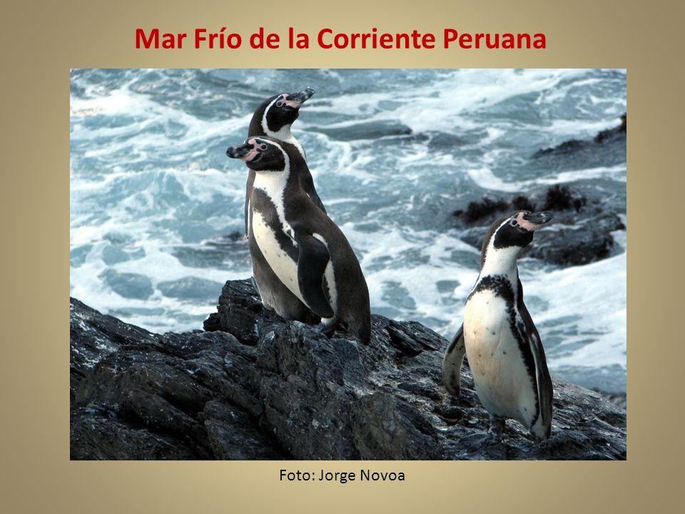 Mar Frío de la Corriente Peruana Foto: Jorge Novoa