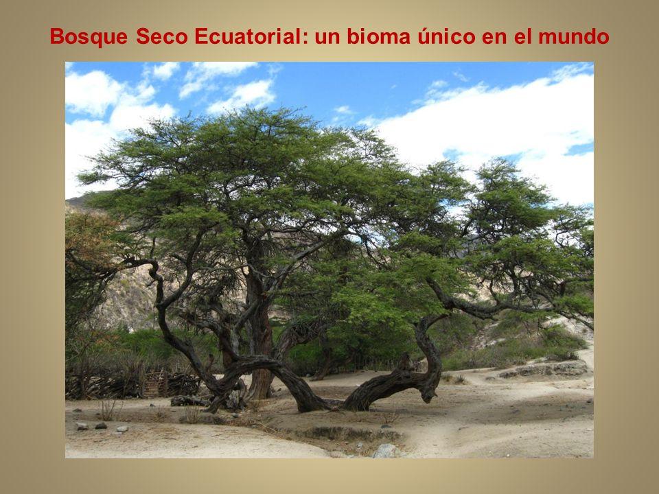 Bosque Seco Ecuatorial: un bioma único en el mundo