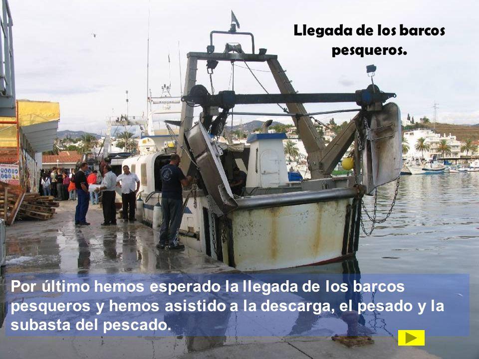 Llegada de los barcos pesqueros. Por último hemos esperado la llegada de los barcos pesqueros y hemos asistido a la descarga, el pesado y la subasta d