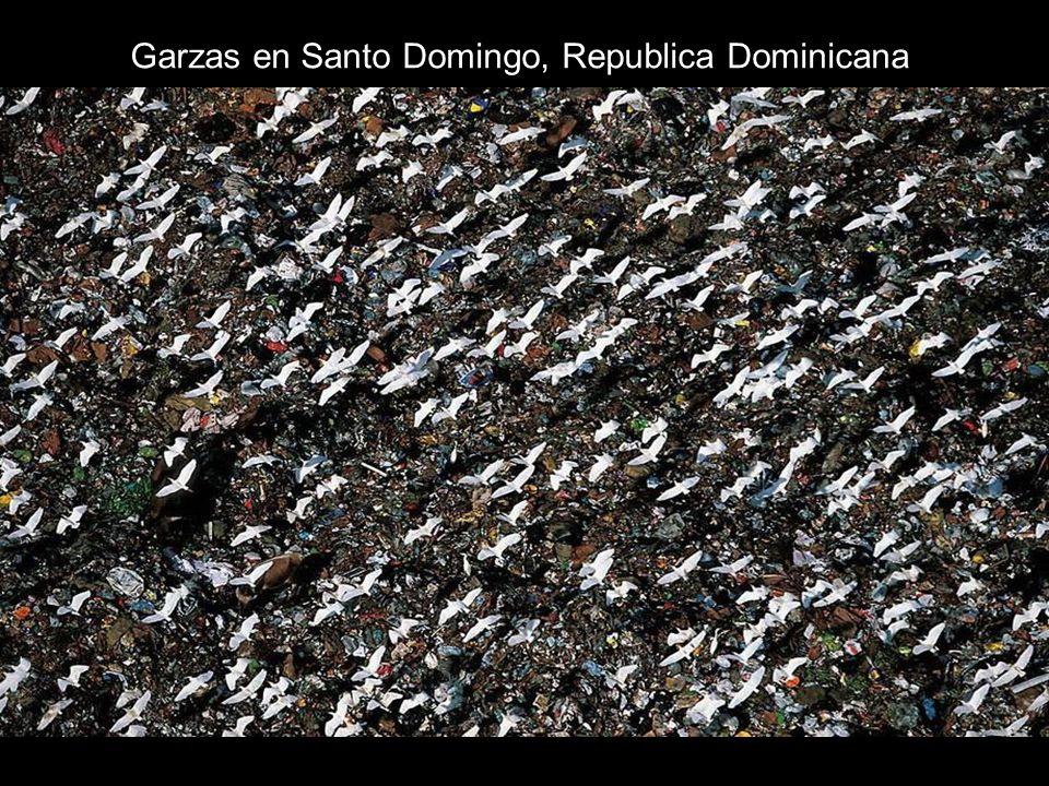 Garzas en Santo Domingo, Republica Dominicana