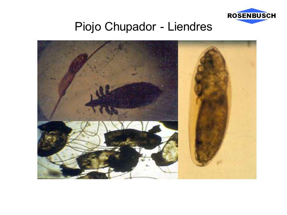Piojo Chupador - Liendres ROSENBUSCH