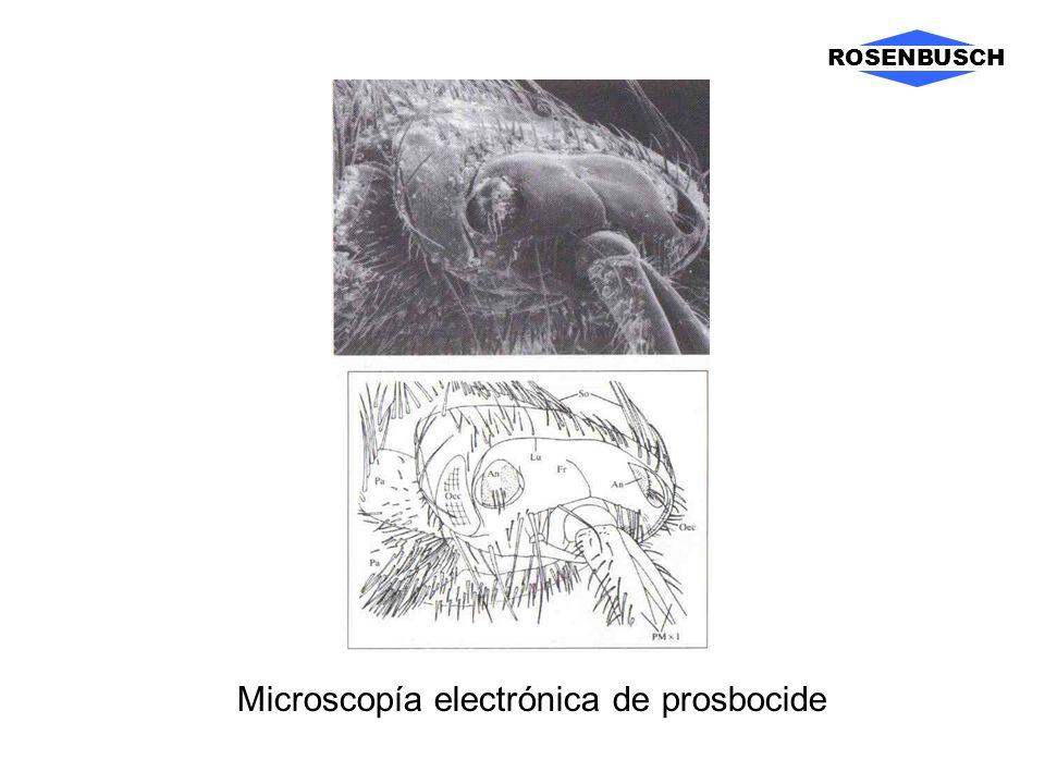 ROSENBUSCH Microscopía electrónica de prosbocide