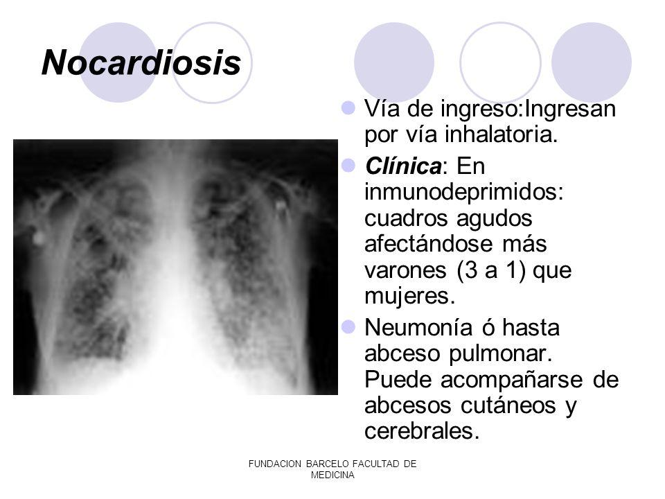 FUNDACION BARCELO FACULTAD DE MEDICINA Nocardiosis Vía de ingreso:Ingresan por vía inhalatoria. Clínica: En inmunodeprimidos: cuadros agudos afectándo