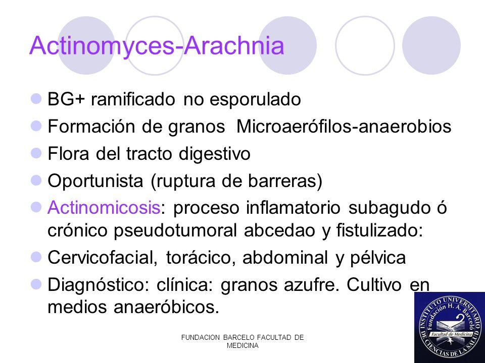 FUNDACION BARCELO FACULTAD DE MEDICINA Actinomyces-Arachnia BG+ ramificado no esporulado Formación de granos Microaerófilos-anaerobios Flora del tract