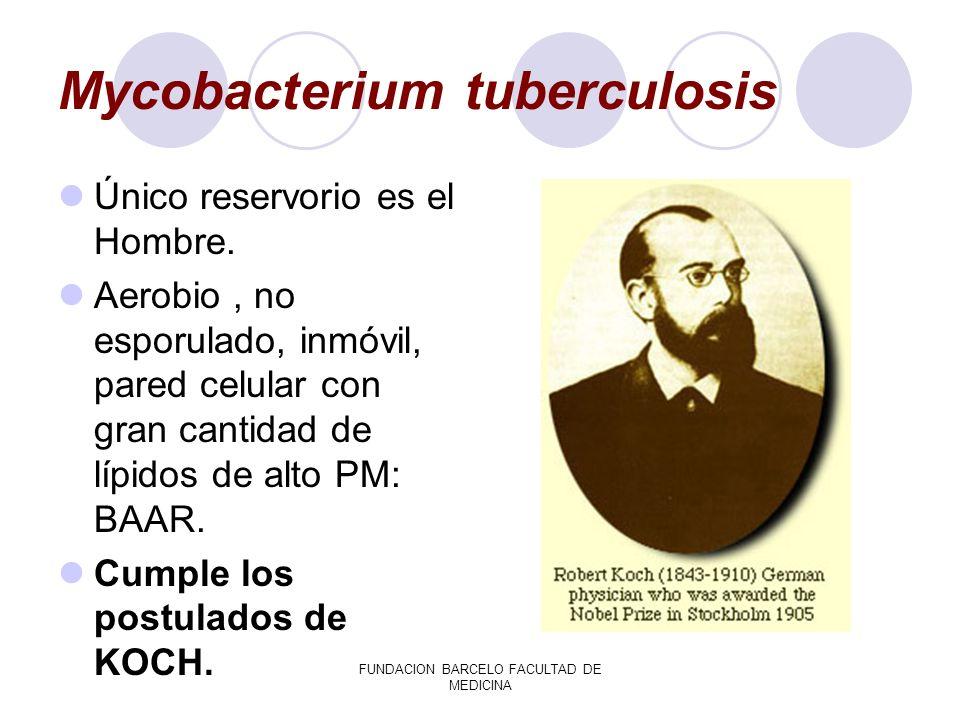 FUNDACION BARCELO FACULTAD DE MEDICINA Mycobacterium tuberculosis Único reservorio es el Hombre. Aerobio, no esporulado, inmóvil, pared celular con gr