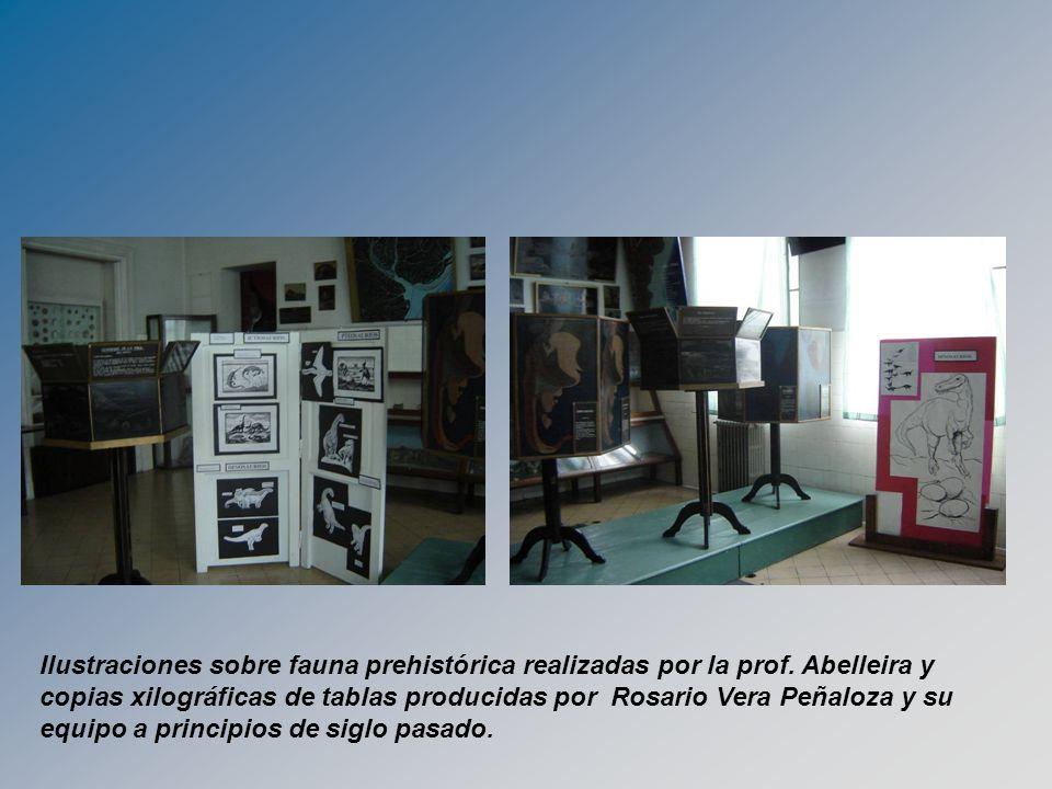 Ilustraciones sobre fauna prehistórica realizadas por la prof. Abelleira y copias xilográficas de tablas producidas por Rosario Vera Peñaloza y su equ
