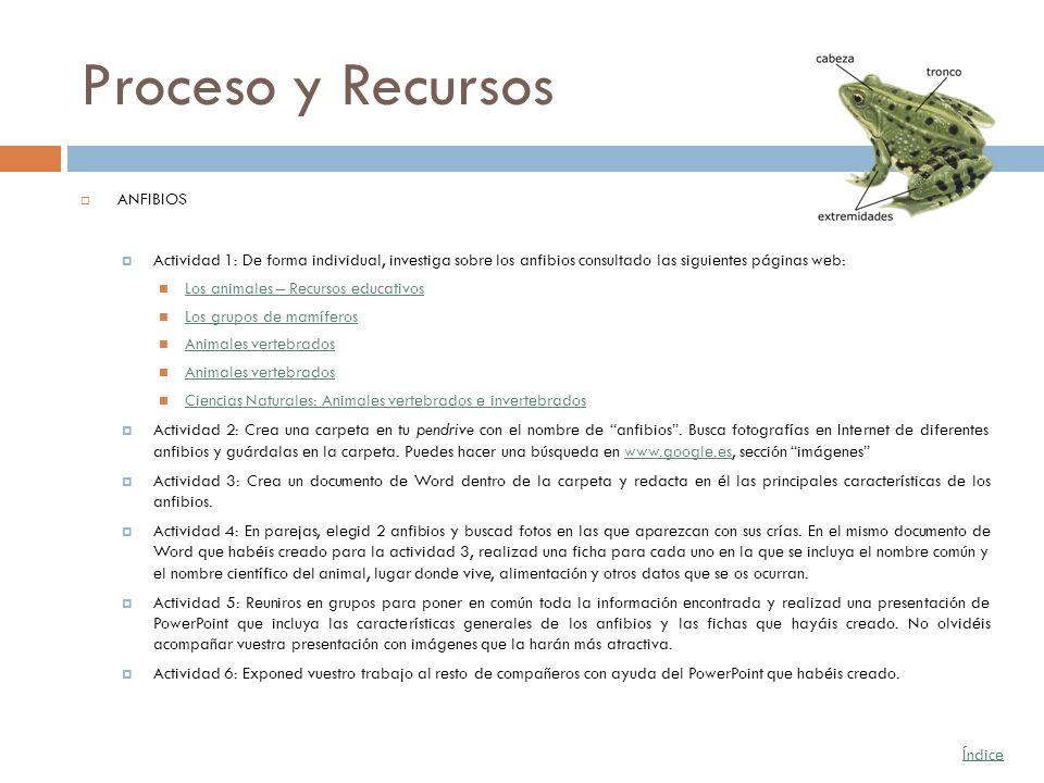 Proceso y Recursos ANFIBIOS Actividad 1: De forma individual, investiga sobre los anfibios consultado las siguientes páginas web: Los animales – Recur