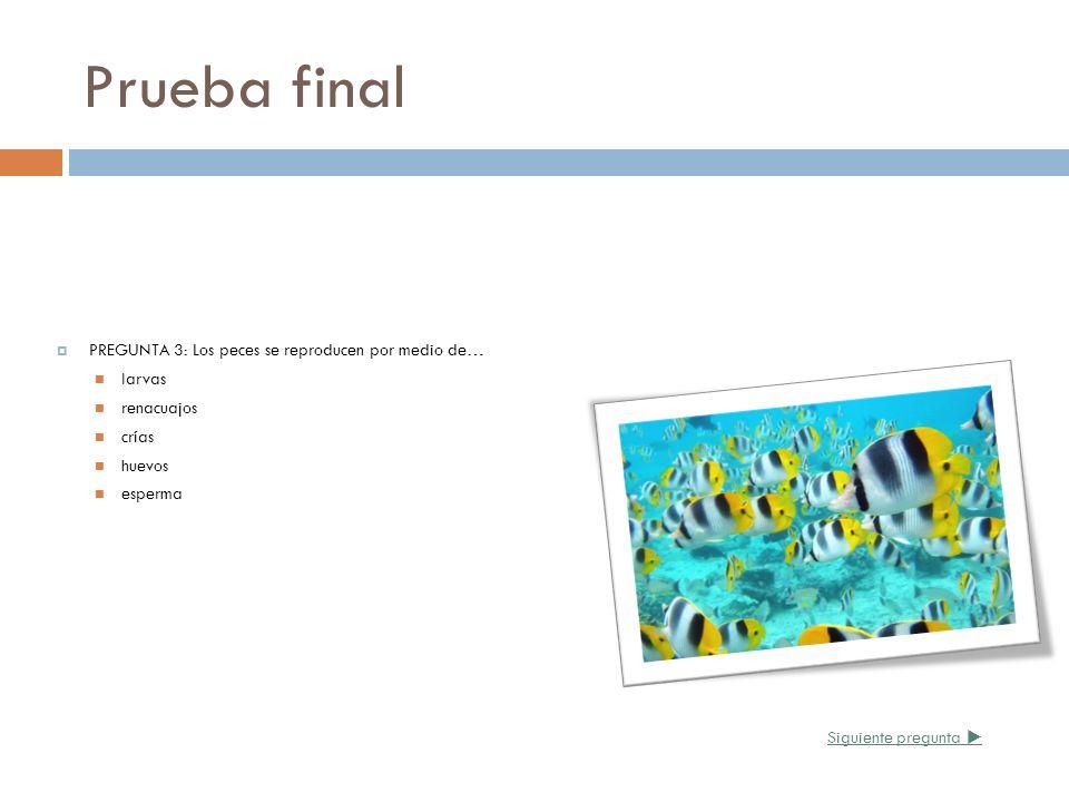 Prueba final PREGUNTA 3: Los peces se reproducen por medio de… larvas renacuajos crías huevos esperma Siguiente pregunta