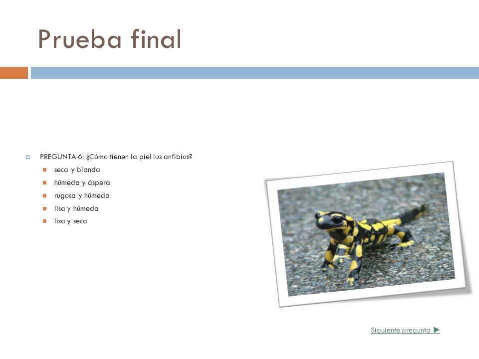 Prueba final PREGUNTA 6: ¿Cómo tienen la piel los anfibios? seca y blanda húmeda y áspera rugosa y húmeda lisa y húmeda lisa y seca Siguiente pregunta