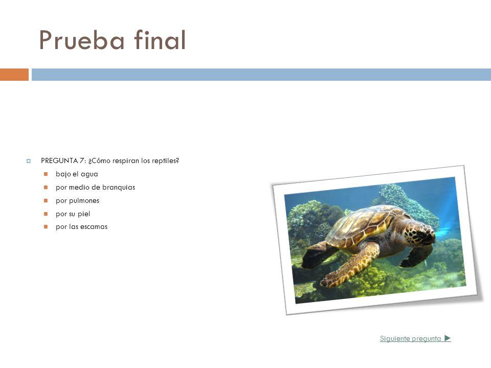Prueba final PREGUNTA 7: ¿Cómo respiran los reptiles? bajo el agua por medio de branquias por pulmones por su piel por las escamas Siguiente pregunta