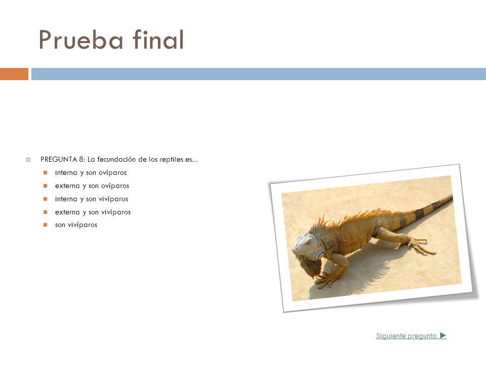 Prueba final PREGUNTA 8: La fecundación de los reptiles es... interna y son ovíparos externa y son ovíparos interna y son vivíparos externa y son viví