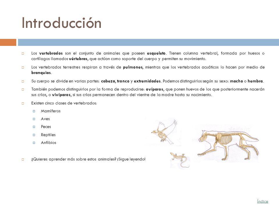 Introducción Los vertebrados son el conjunto de animales que poseen esqueleto. Tienen columna vertebral, formada por huesos o cartílagos llamados vért