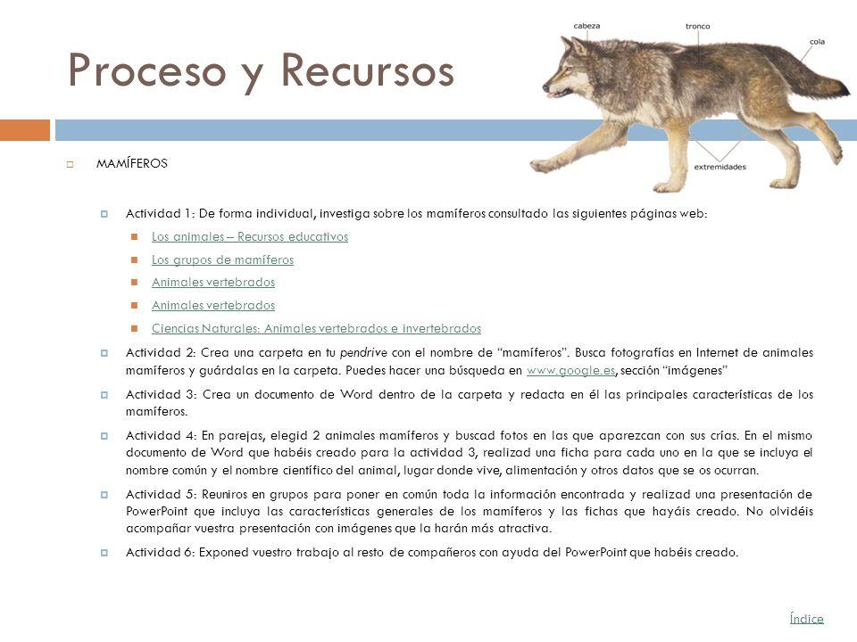 Proceso y Recursos MAMÍFEROS Actividad 1: De forma individual, investiga sobre los mamíferos consultado las siguientes páginas web: Los animales – Rec