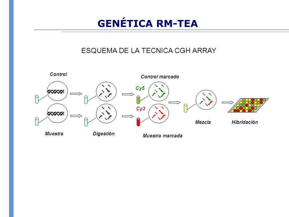 GENÉTICA RM-TEA HibridaciónMezcla Control marcado Cy3 Muestra marcada Cy5 DigestiónMuestra Control ESQUEMA DE LA TECNICA CGH ARRAY