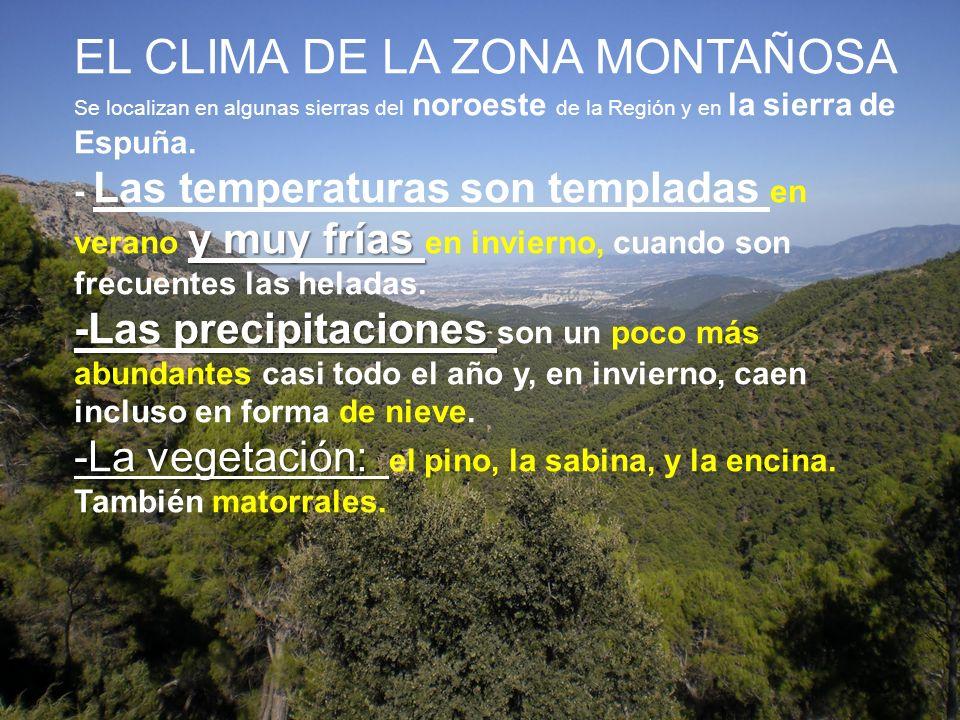 y muy frías -Las precipitaciones -La vegetación: EL CLIMA DE LA ZONA MONTAÑOSA Se localizan en algunas sierras del noroeste de la Región y en la sierr