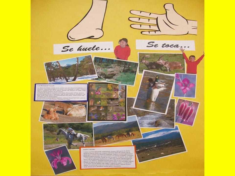 FAUNA Y FLORA Contiene una flora espectacular compuesta por, al menos, 869 especies de plantas, algunas de especial interés, que componen más de dos t
