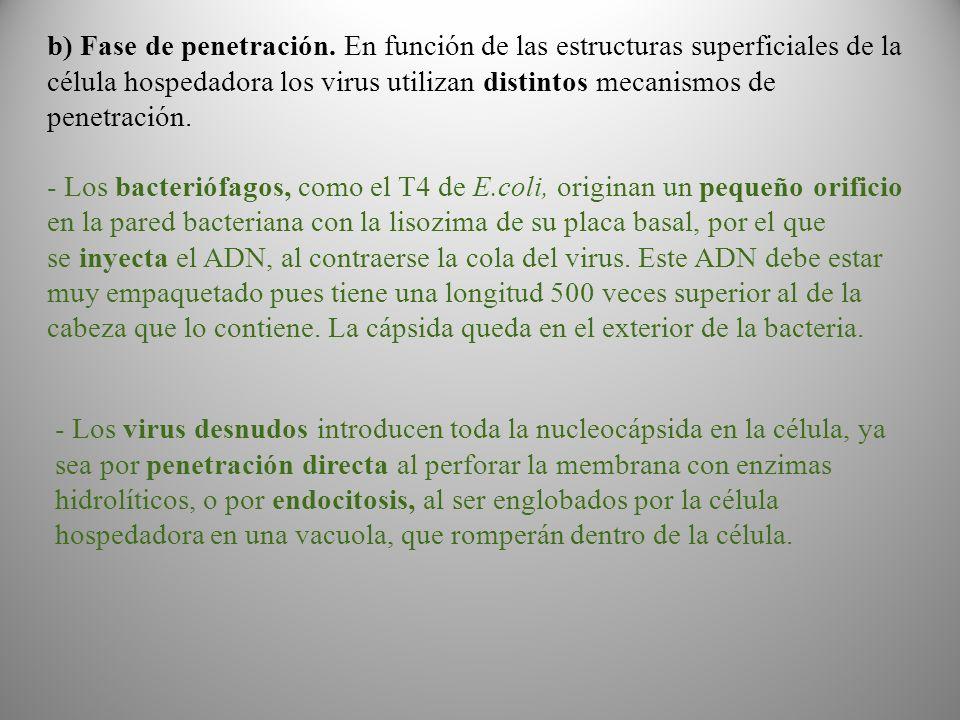 b) Fase de penetración.