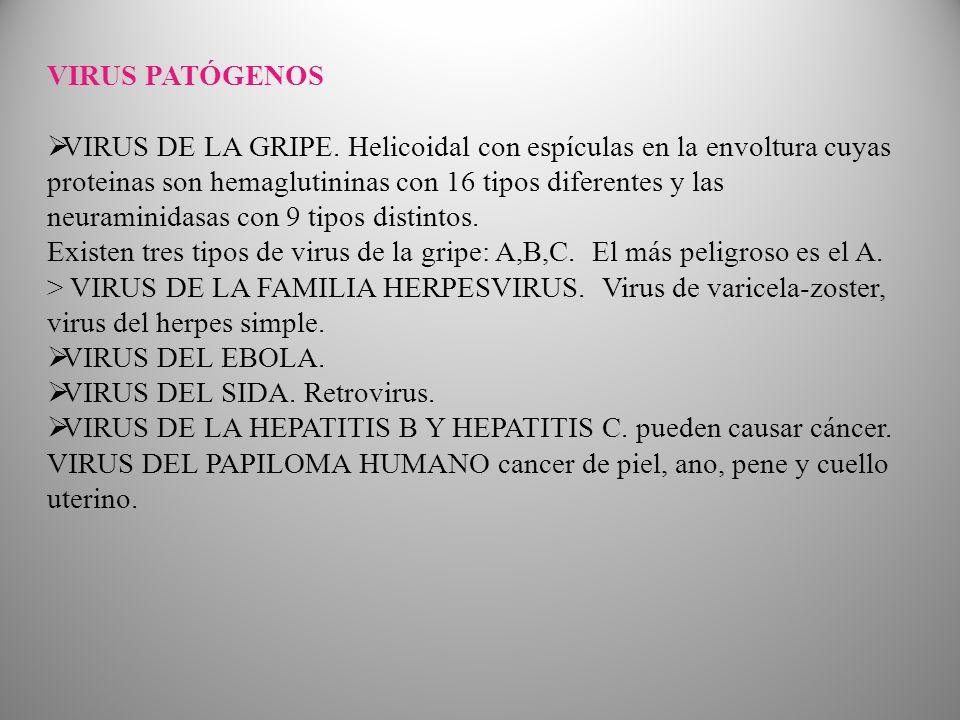 VIRUS PATÓGENOS VIRUS DE LA GRIPE.
