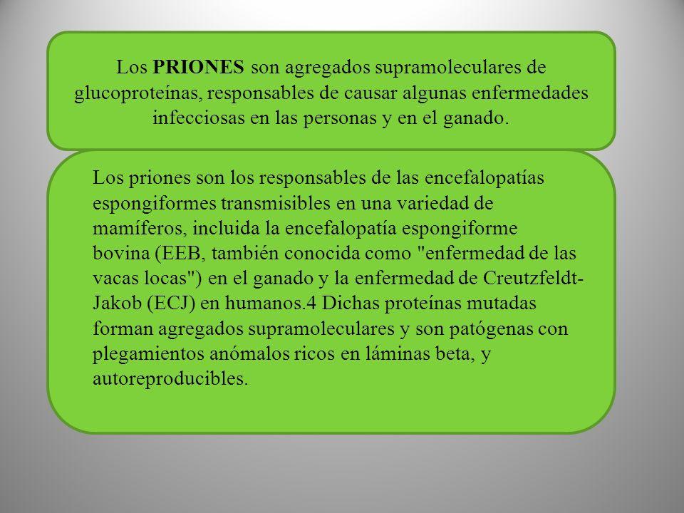 Los PRIONES son agregados supramoleculares de glucoproteínas, responsables de causar algunas enfermedades infecciosas en las personas y en el ganado.