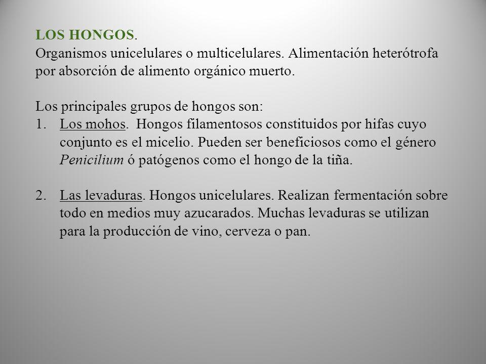 LOS HONGOS.Organismos unicelulares o multicelulares.