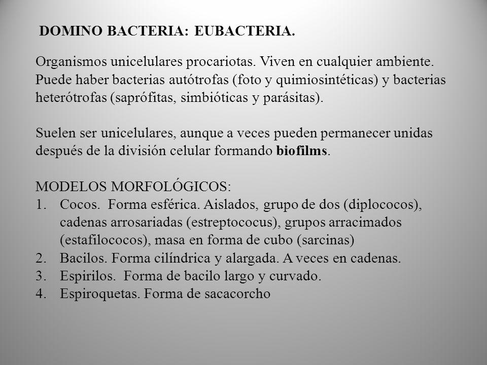DOMINO BACTERIA: EUBACTERIA.Organismos unicelulares procariotas.