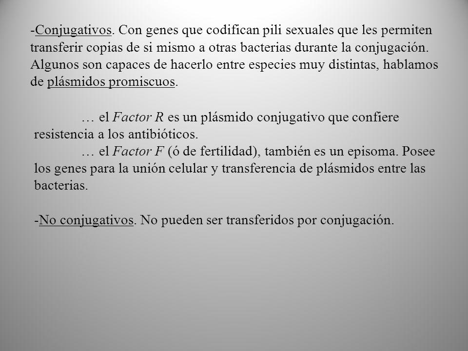 … el Factor R es un plásmido conjugativo que confiere resistencia a los antibióticos.