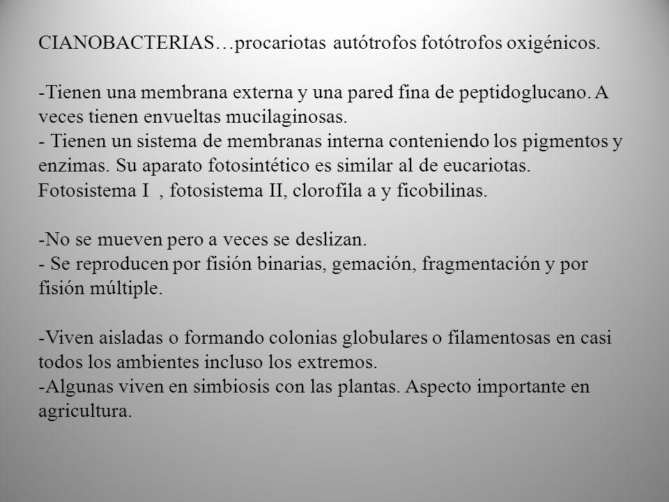 CIANOBACTERIAS…procariotas autótrofos fotótrofos oxigénicos.