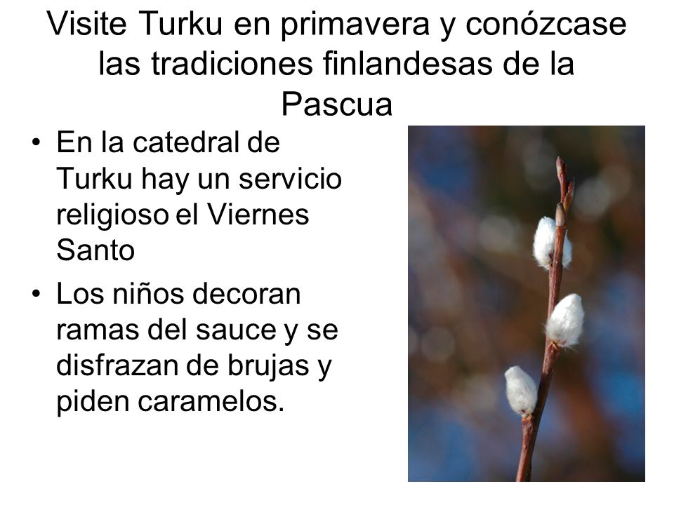 Visite Turku en primavera y conózcase las tradiciones finlandesas de la Pascua En la catedral de Turku hay un servicio religioso el Viernes Santo Los
