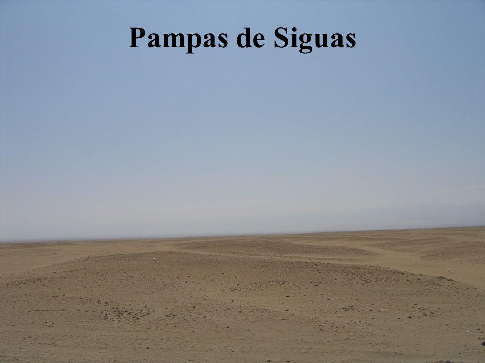 Pampas de Siguas