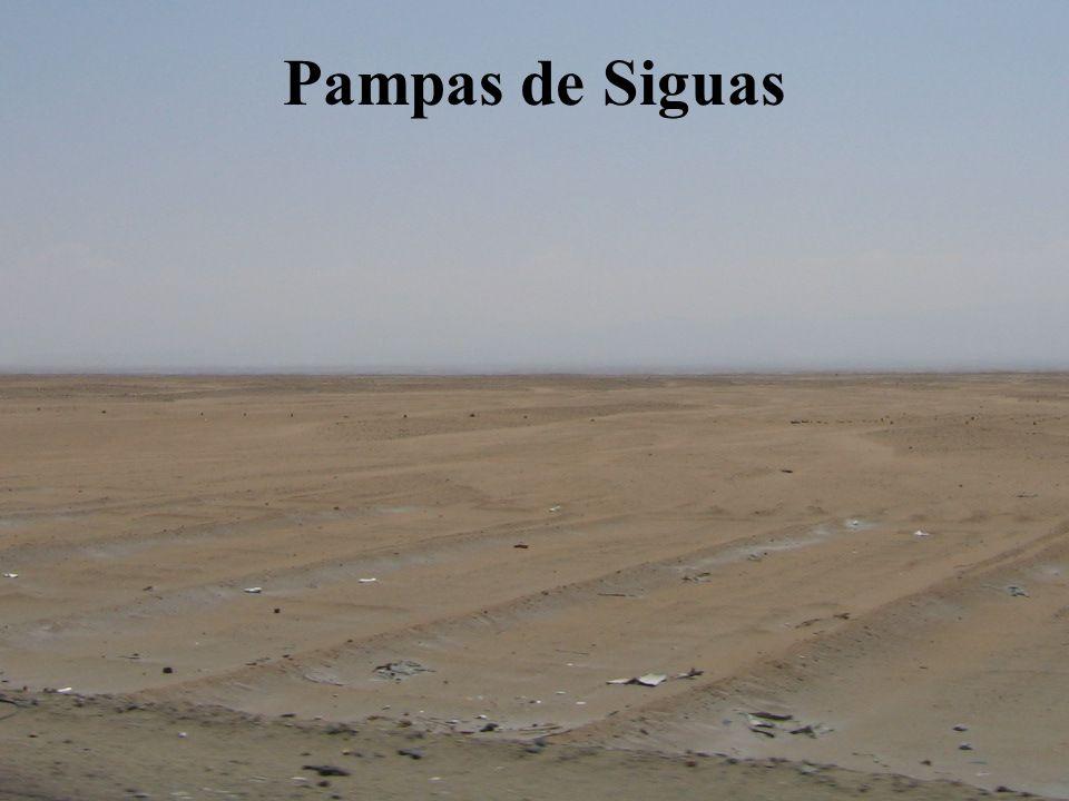 Pampas de Majes
