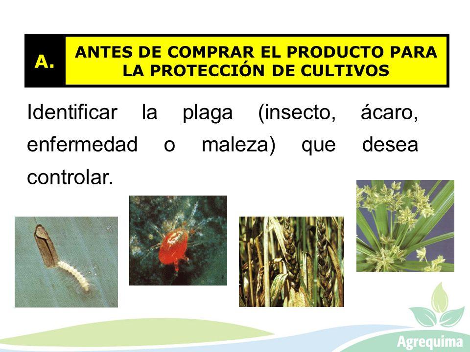 ANTES DE COMPRAR EL PRODUCTO PARA LA PROTECCIÓN DE CULTIVOS A. Identificar la plaga (insecto, ácaro, enfermedad o maleza) que desea controlar.