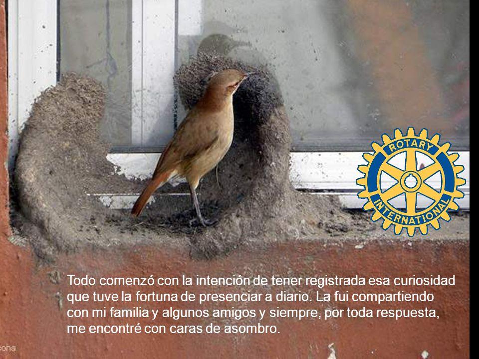 Rotary Club Moreno presenta Horneros Urbanos Arquitectos no diplomados.
