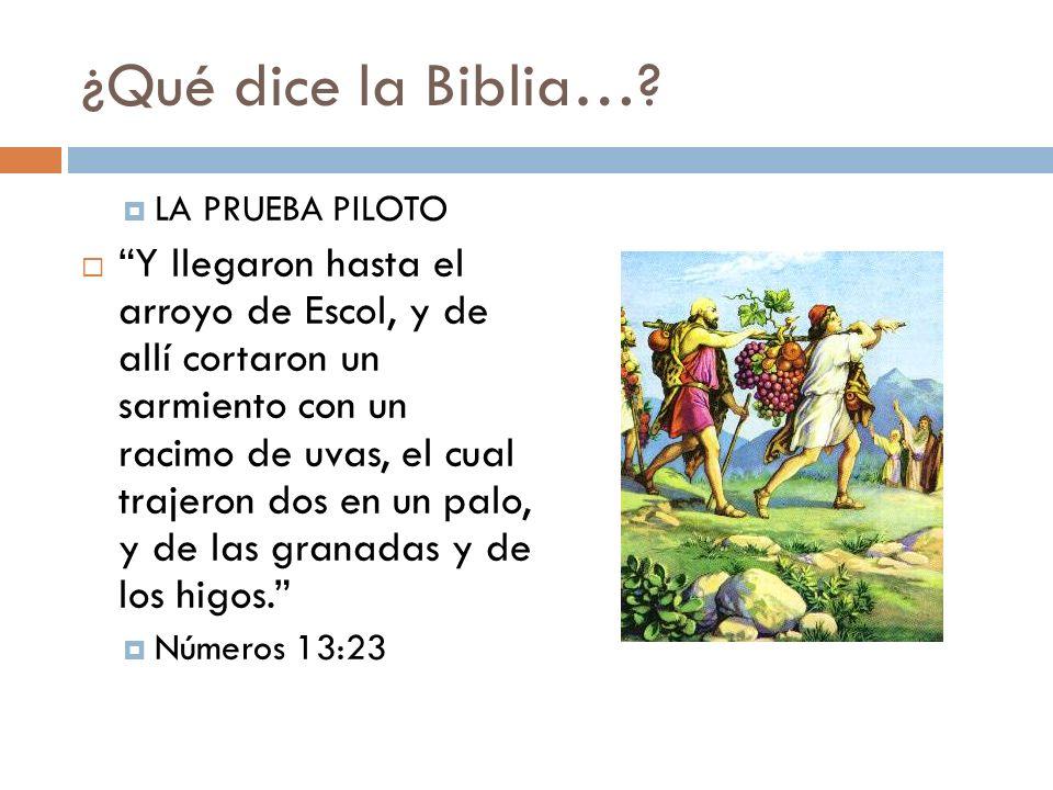 ¿Qué dice la Biblia…? LA PRUEBA PILOTO Y llegaron hasta el arroyo de Escol, y de allí cortaron un sarmiento con un racimo de uvas, el cual trajeron do