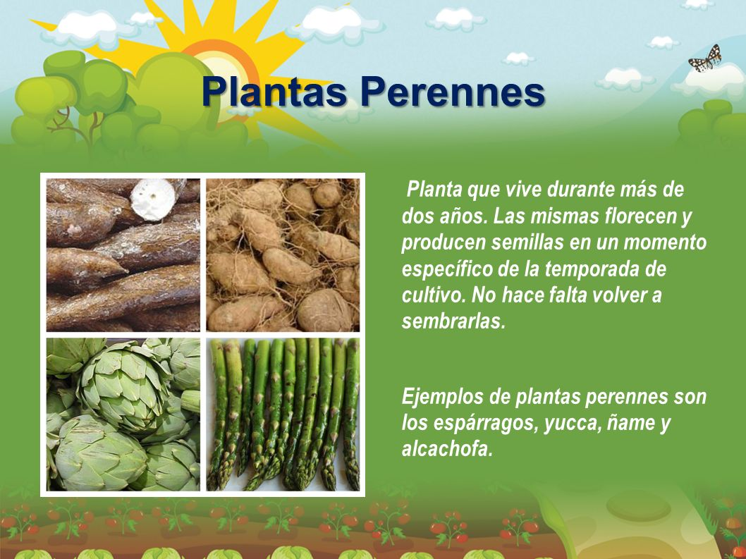 Plantas Perennes Planta que vive durante más de dos años. Las mismas florecen y producen semillas en un momento específico de la temporada de cultivo.