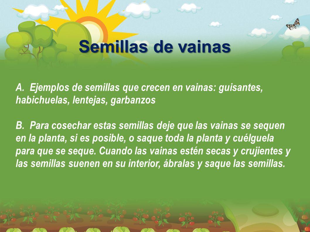Semillas de vainas A. Ejemplos de semillas que crecen en vainas: guisantes, habichuelas, lentejas, garbanzos B. Para cosechar estas semillas deje que