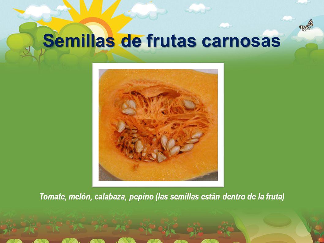 Semillas de frutas carno Semillas de frutas carnosas Tomate, melón, calabaza, pepino (las semillas están dentro de la fruta)
