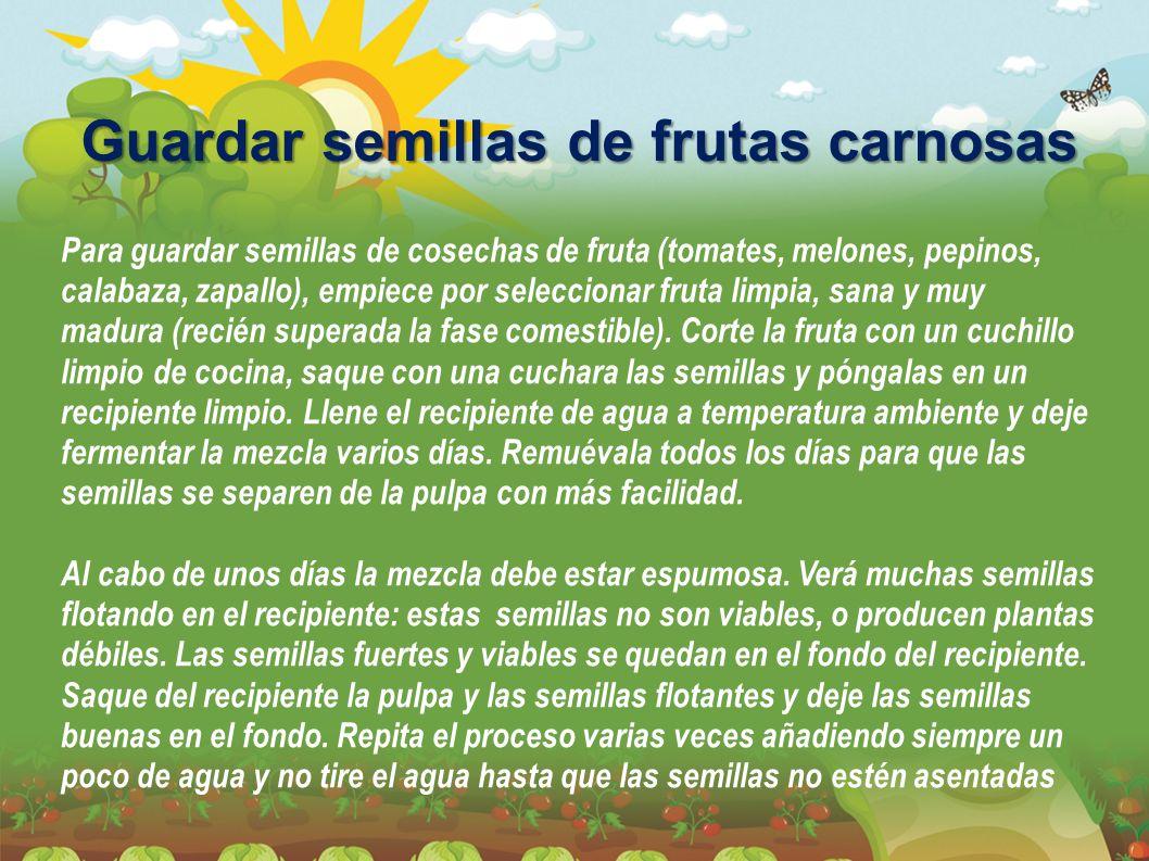 Guardar semillas de frutas carnosas Para guardar semillas de cosechas de fruta (tomates, melones, pepinos, calabaza, zapallo), empiece por seleccionar